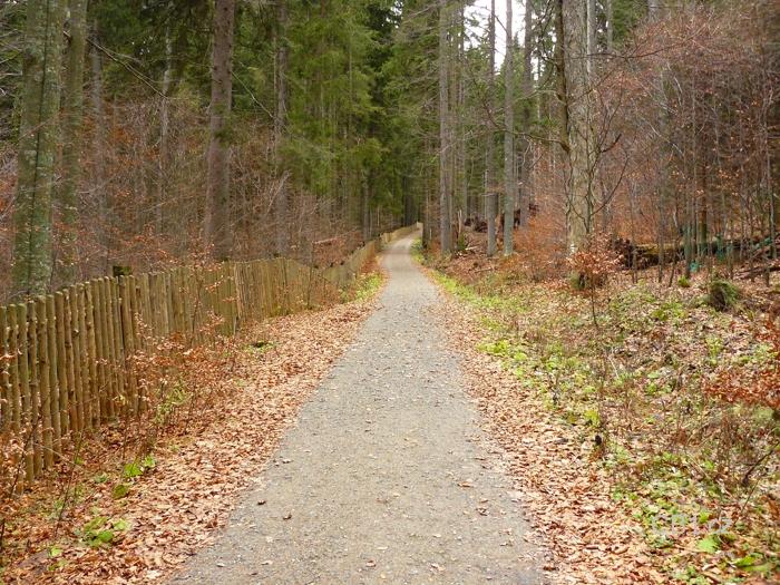 Plot kolem pralesa