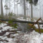 Tip na výlet: Boubínský prales a hora s rozhlednou Boubín